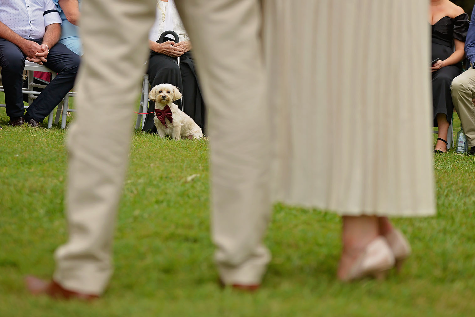elopement brisbane elope micro wedding pop up wedding dog wedding furbaby at wedding
